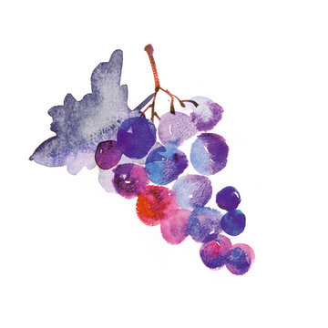 watercolor hand made illustration of grapes
