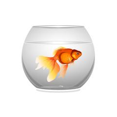 золотая рыбка в аквариуме, векторная иллюстрация,