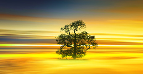 Photo sur Aluminium Jaune Beautiful colorful natural landscape.