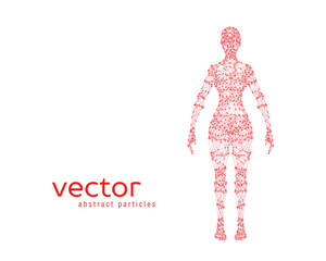 Vector illustration of female body