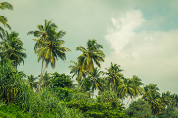 Coconut palm trees and mangrove in tropics. Toned effect