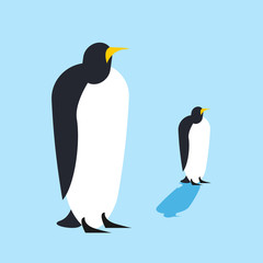 Penguin isolated. Arctic birds. Animal Antarctica Funa at the No