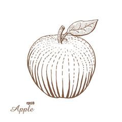 Apple. Woodcut style. Vector illustration.