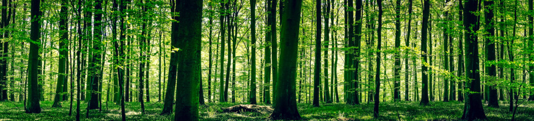 Fototapeten Wald Idyllic forest in the springtime
