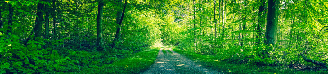 Papiers peints Forets Dirt road in a green forest panorama
