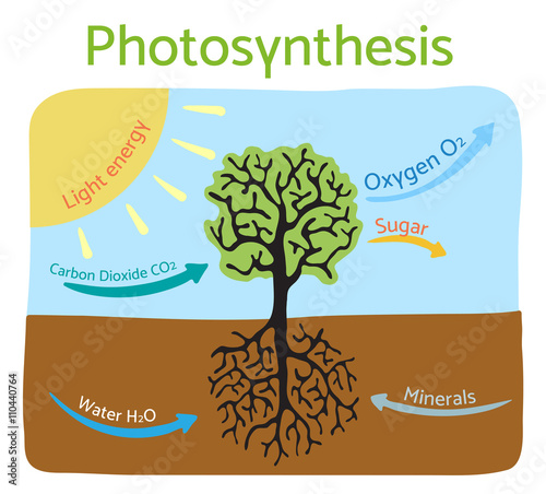 Photosynthesis process diagram schematic vector illustration photosynthesis process diagram schematic vector illustration ccuart Images