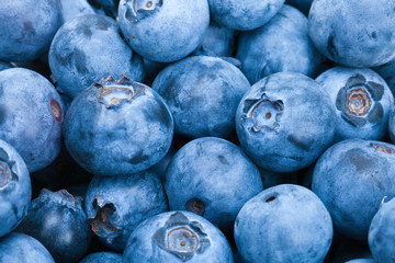 Bunch of freshly picked blueberries - close up studio shot