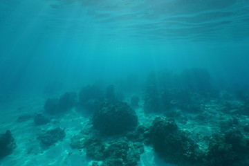 Underwater landscape, ocean floor with corals and sunlight through water surface, natural scene, Pacific ocean, French Polynesia