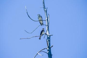 Birds on Blue