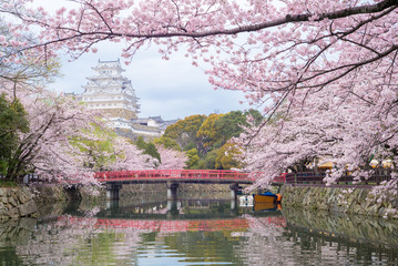 Himeji Castle with beautiful cherry blossom in spring season