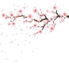 Pink sakura flowers isolated on white. EPS 10