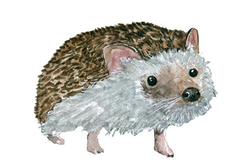 Hedgehog . Watercolor for design and printing