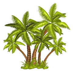 Illustration of tropical palm trees
