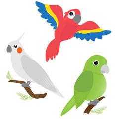 Set of cartoon parrots