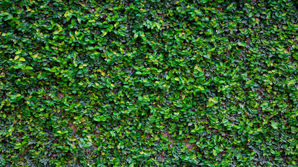 Green Creeper Texture