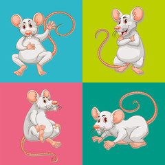 Mouse in four color backgrounds