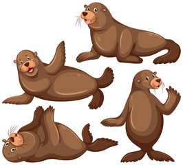 Sea lion in four poses