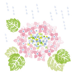 梅雨 雨と額紫陽花の花