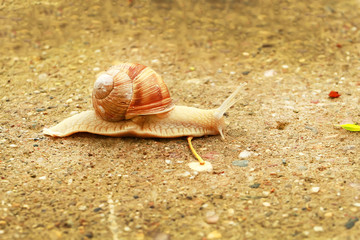 Snail at the garden