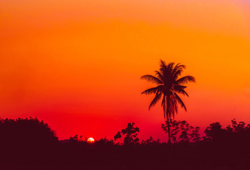Silhouette coconut palm trees at sunset. Vintage tone.