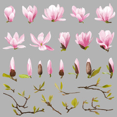 Magnolia Flowers and Leaves Set. Exotic Flower. Vector