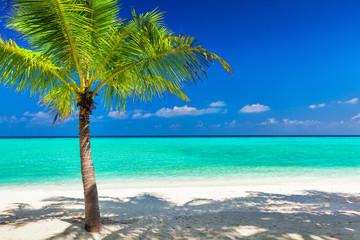 Single vibrant coconut palm tree on white tropical beach of Mald