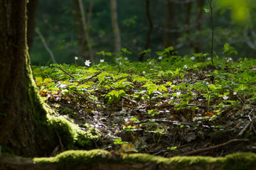 Magical Forest Ground Nature Nature