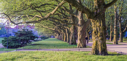 venue of plane trees in the spring in city park