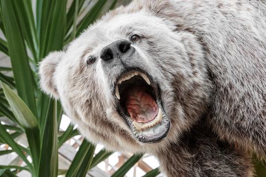 stuffed roaring bear's head