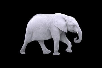 White Elephant Isolated on Black Background