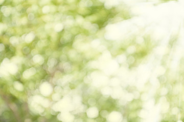 Green and white blur bokeh with sunlight, abstract light spring forest background
