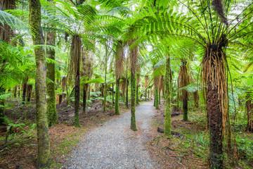 Pathway through rain forest #2, New Zealand