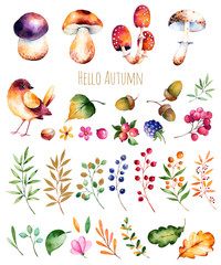 Bright collection with autumn leaves,flowers,branches,berries,acorns,blackberries, mushrooms, chestnut and little bird.Colorful autumn collection with 33 watercolor elements.Autumn collection.