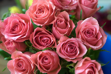 pink Roses / pink roses over a bright background