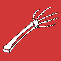 arm bones illustration
