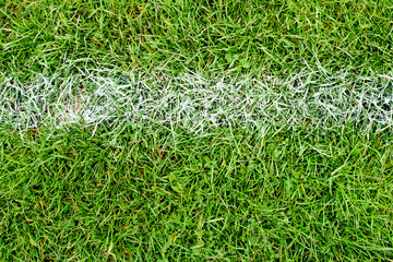 White Chalk Line on Green Grass