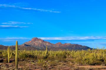 Dramatic view of Arizona's Sonoran desert at sunset.
