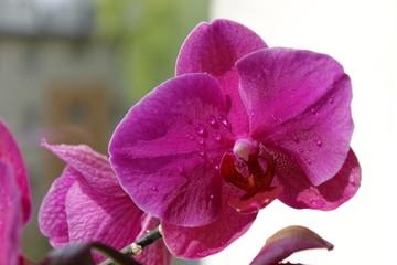 Fototapeta Kwiaty - storczyki obraz