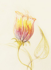 Color drawing flower. Original hand draw on paper.