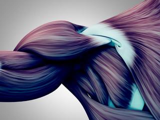 Human anatomy muscle shoulder. 3D illustration.