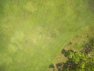 Foto op Aluminium Luchtfoto Natural grass texture