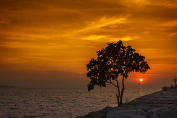 Sea in sunset with silhouette tree foreground
