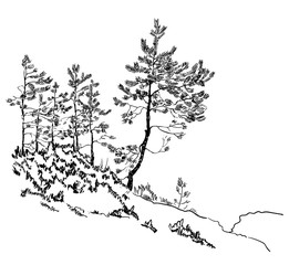 A sketch of pines on the stone hill. Nordic landscape.