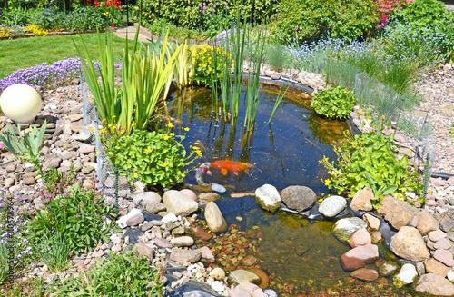 Teichanlage mit koi karpfen im garten stockfotos und for Koi fische im gartenteich