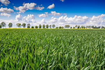krajobraz trawa