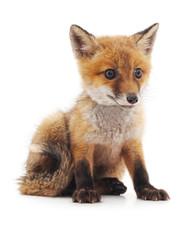 Little fox.