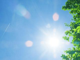 葉 新緑 風景 背景