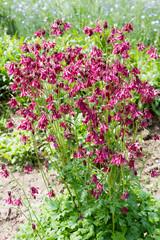 flowering bush bell