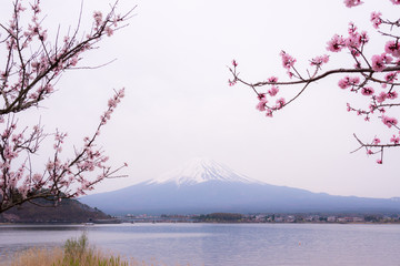 Mountain Fujiyama, a remarkable land mark of Japan in a cloudy day with cherry blossom or Sakura in the frame. The picture of Spring.