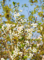 spring background of branches
